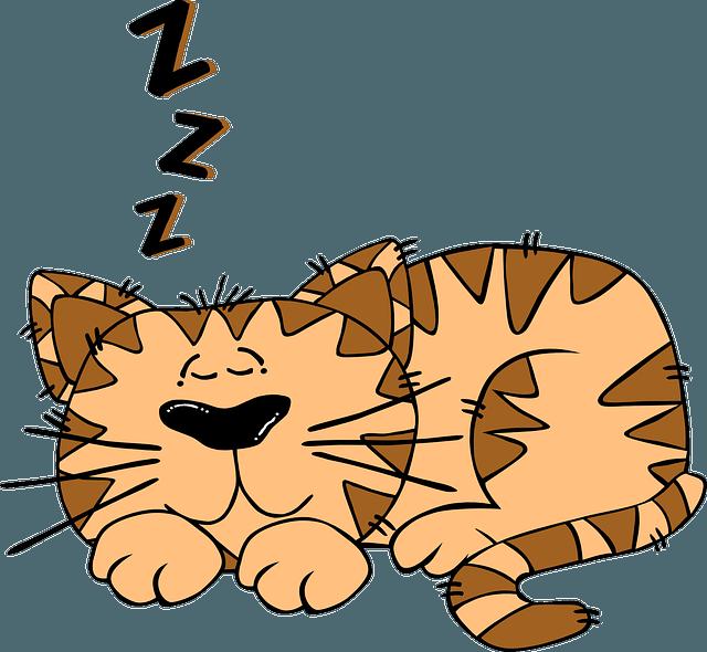 Chat qui dort profondément pour remettre en ordre sa mémoire après avoir beaucoup révisé.